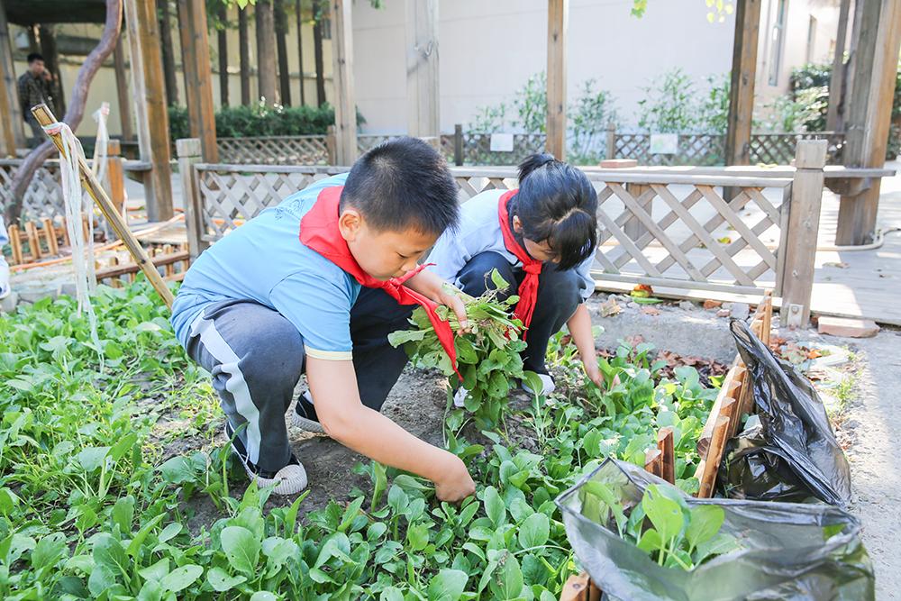 上海市中小学食育 | 闵行区航华第一小学:打造舌尖上的教育